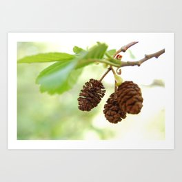 Acorns, Philipsburg Manor, Sleepy Hollow NY Art Print