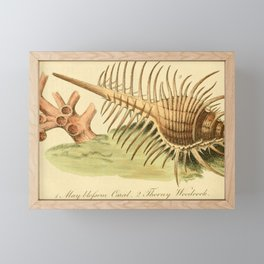 Vintage Print - Bullock's London Museum & Pantherion (1812) - May-Blossom Coral Framed Mini Art Print