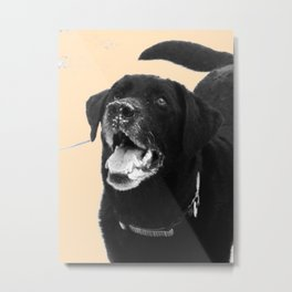 Labrador Happy Metal Print
