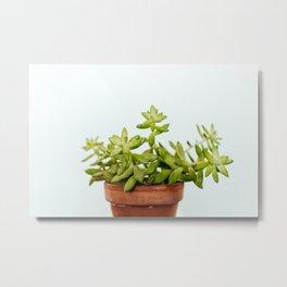 The Unidentified Houseplant Metal Print