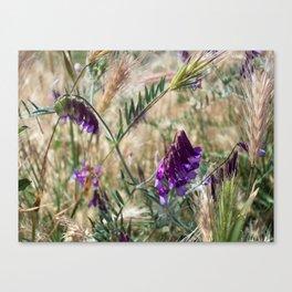 Field flowers Canvas Print