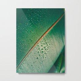 Close Up Of Tropical Succulent Green Leaf Metal Print