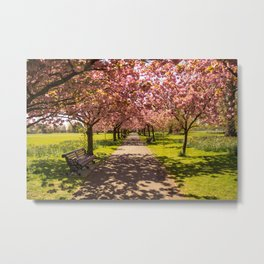 Spring at the Park Metal Print