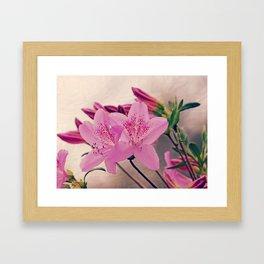 Azaleas Framed Art Print