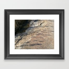 Reed Shadows Framed Art Print