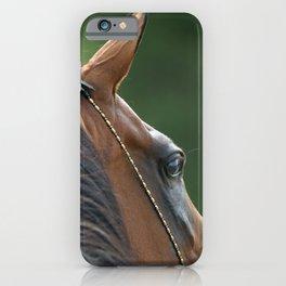 Arabian horse close-up iPhone Case