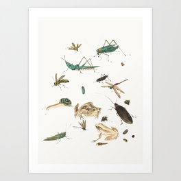 Insects, frogs and a snail Art Print