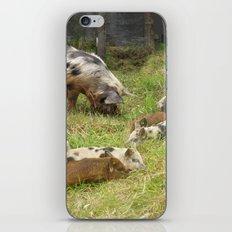 Kunekune Pigs Christmas Greeting iPhone & iPod Skin