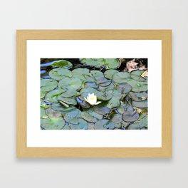 Raindrops in my pond Framed Art Print