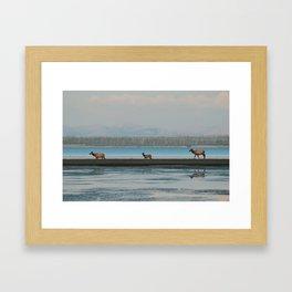Yellowstone Elk Framed Art Print