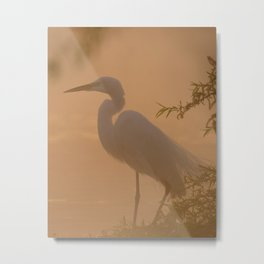 Snowy Egret waits for prey in the morning mist Metal Print