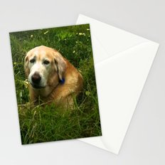 Pondering Paws Stationery Cards