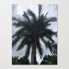 Messico palme Canvas Print