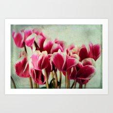 Cyclamen blossom Art Print