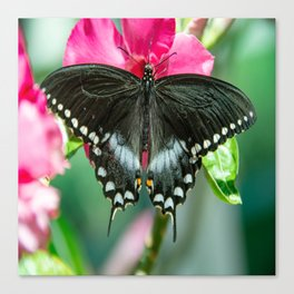 Easter Tiger Swallowtail Butterfly Canvas Print