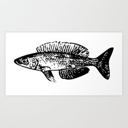 Cyprichromis cichlid Art Print