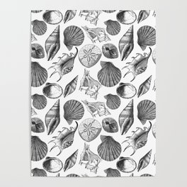 Sea and Ocean Life-Shell Pattern - Mix & Match with Simplicity of life Poster