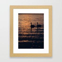 LaSalle Swans Framed Art Print