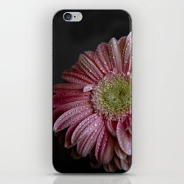 Gerbera spring iPhone Skin