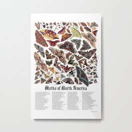 Moths of North America Metal Print