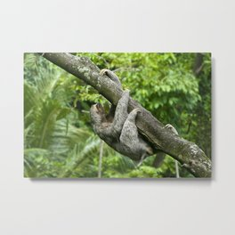Three-toed sloth climbing tree Metal Print
