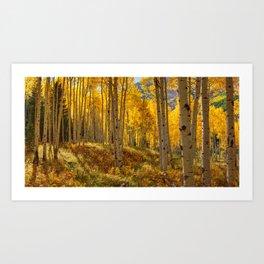 Autumn Aspen Forest in Aspen Colorado USA Art Print