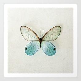 Blue Gold Glasswing Art Print