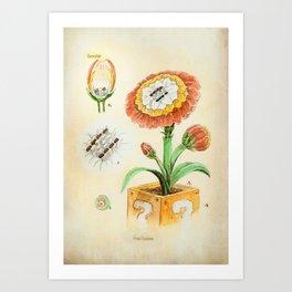 Fire Flower Botanical Illustration Art Print