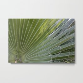 Photographic Abstract Of Fan Palm With Fibrous Threads Metal Print