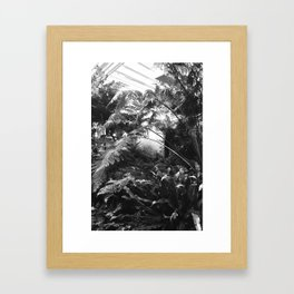 Rainforest Framed Art Print