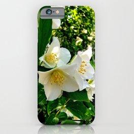 White Jasmin Blossoms iPhone Case