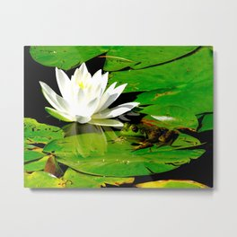 Frog with lily flower reflection Metal Print