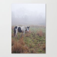 Black and White Horse Canvas Print