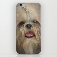 shih tzu iPhone & iPod Skins featuring Shih Tzu by Pauline Fowler ( Polly470 )