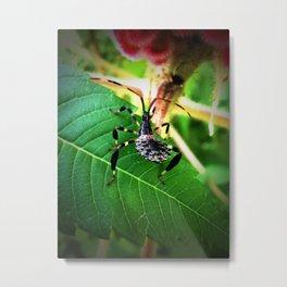 Assassin Bug Metal Print
