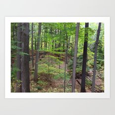DEEP WOODS AUTUMN (Whiting Road Nature Preserve, Webster, NY) Art Print