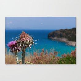 CretanThistle And Sea Canvas Print
