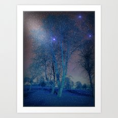Snowy Silver Birches. Art Print