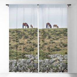 Asturcon, Asturian pony Blackout Curtain