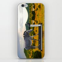 fitness iPhone & iPod Skins featuring Fitness Zebra by Bemular