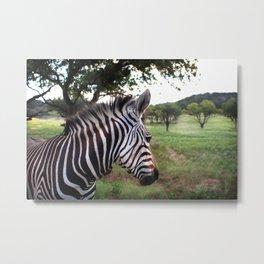 Profile of a Zebra  Metal Print