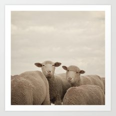 Smiling Sheep  Art Print