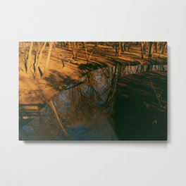 Acer saccharinum Metal Print