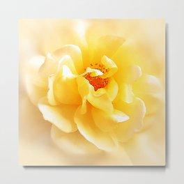 Soft Light Colors Rose Metal Print