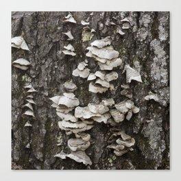 Fungi Tree Bark Canvas Print