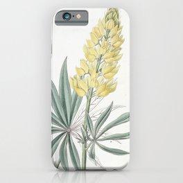 Flower 1435 lupinus sabinianus Yellow Perennial Lupine15 iPhone Case