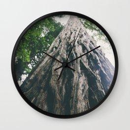 giant redwood tree Wall Clock