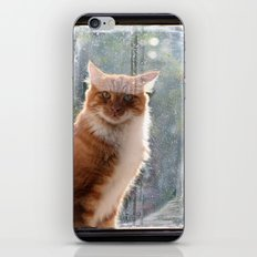 Ginger Cat  waiting by the window  (CW004) iPhone & iPod Skin
