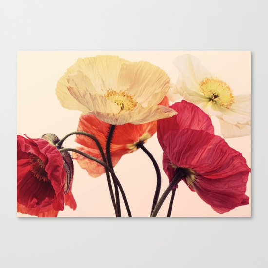 Posing Poppies - bright, vintage toned poppy still life Canvas Print