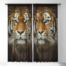 Wild Tiger with Blue eyes Blackout Curtain
